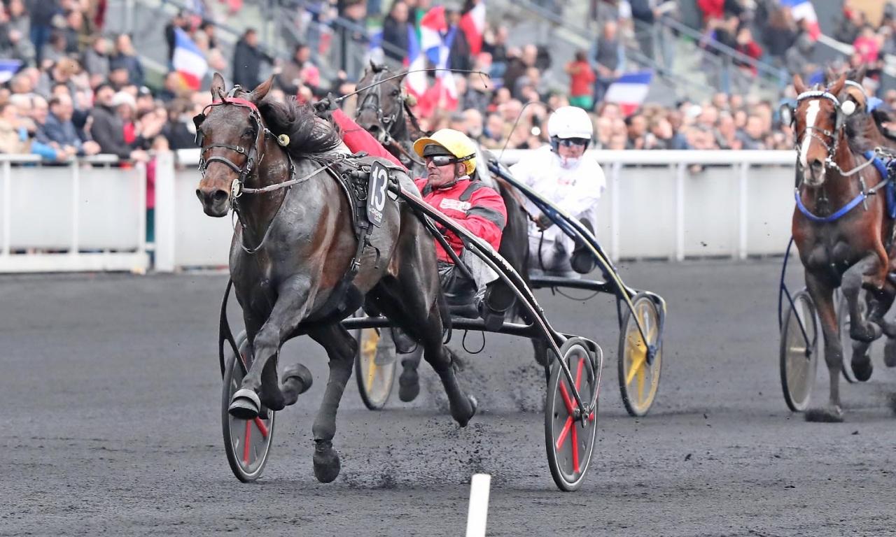 Bold Eagle vann Prix du Bourbonnais 2016, ifjol slutade han tvåa och på söndag startar han i storloppet igen på Vincennes. Foto Mia Törnberg