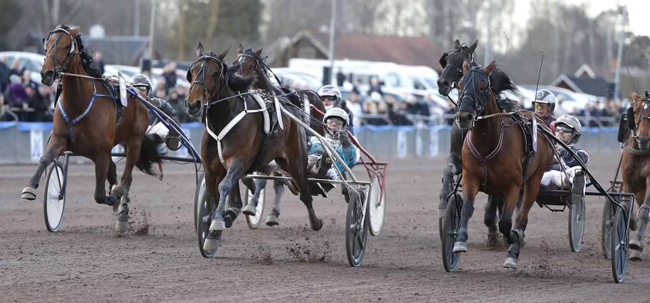 In Toto Sund och Örjan Kihlström (mitten) vid segern i Kjell P Dahlströms Minne. Nu ska stoet försöka vinna Prix Helen Johansson. Foto: Micke Gustafsson/ALN