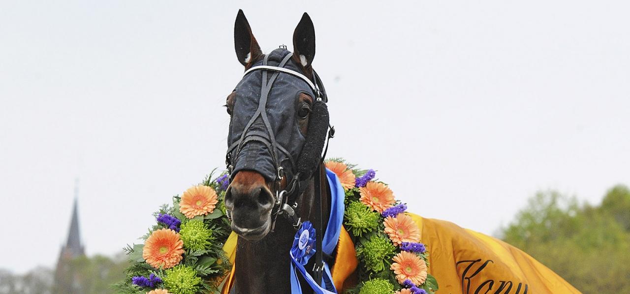 Diamanten fick en ny segerkrans sedan han vunnit Ulf Thoresen International på Jarlsberg. Foto: Adam Ström/Stalltz.se