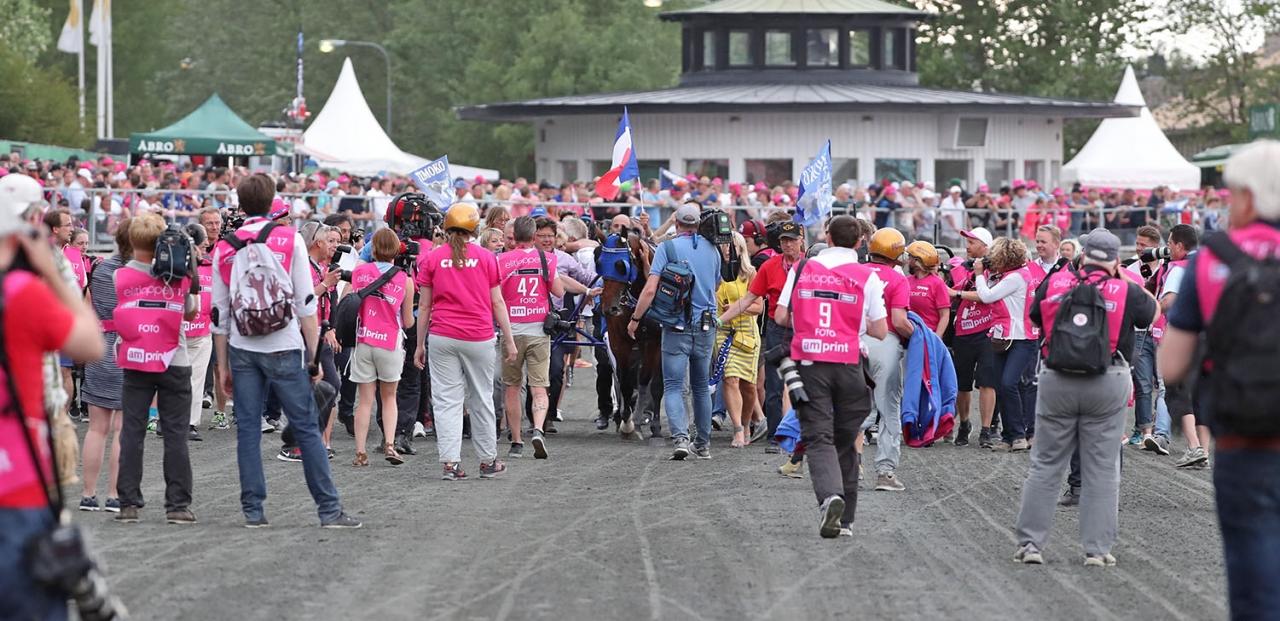 Timoko vann förra året. Vem vinner Elitloppet i år? Här är alla startlistor till helgens tävlingar på Solvalla. Foto Mia Törnberg/Sulkysport