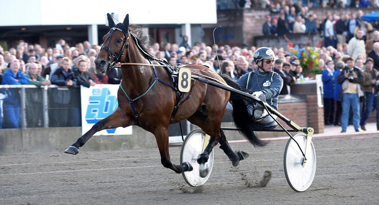 Victory Tilly hade inte sprungit in 37,7 miljoner kronor om han varit hingst. Foto Stalltz.se