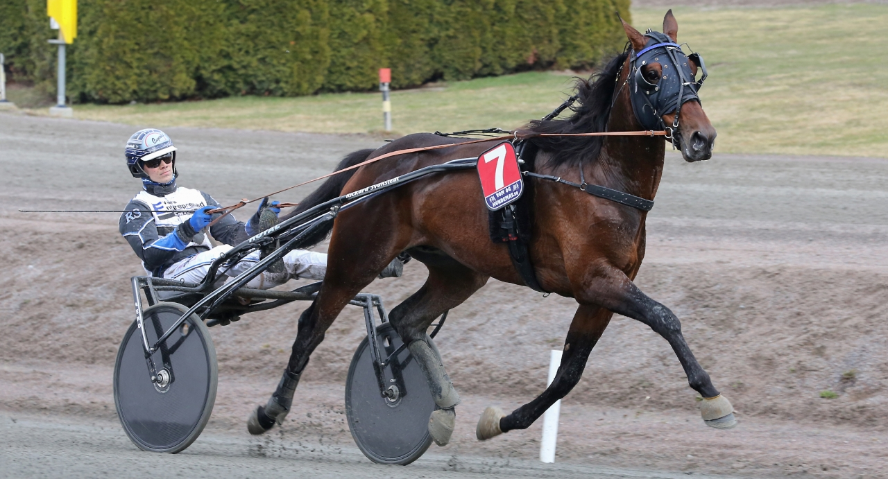 Baron Gift och Rickard Svanstedt. Axevallahästen är Gift Kronos främsta avkomma. Foto: Jeannie Karlsson/Sulkysport