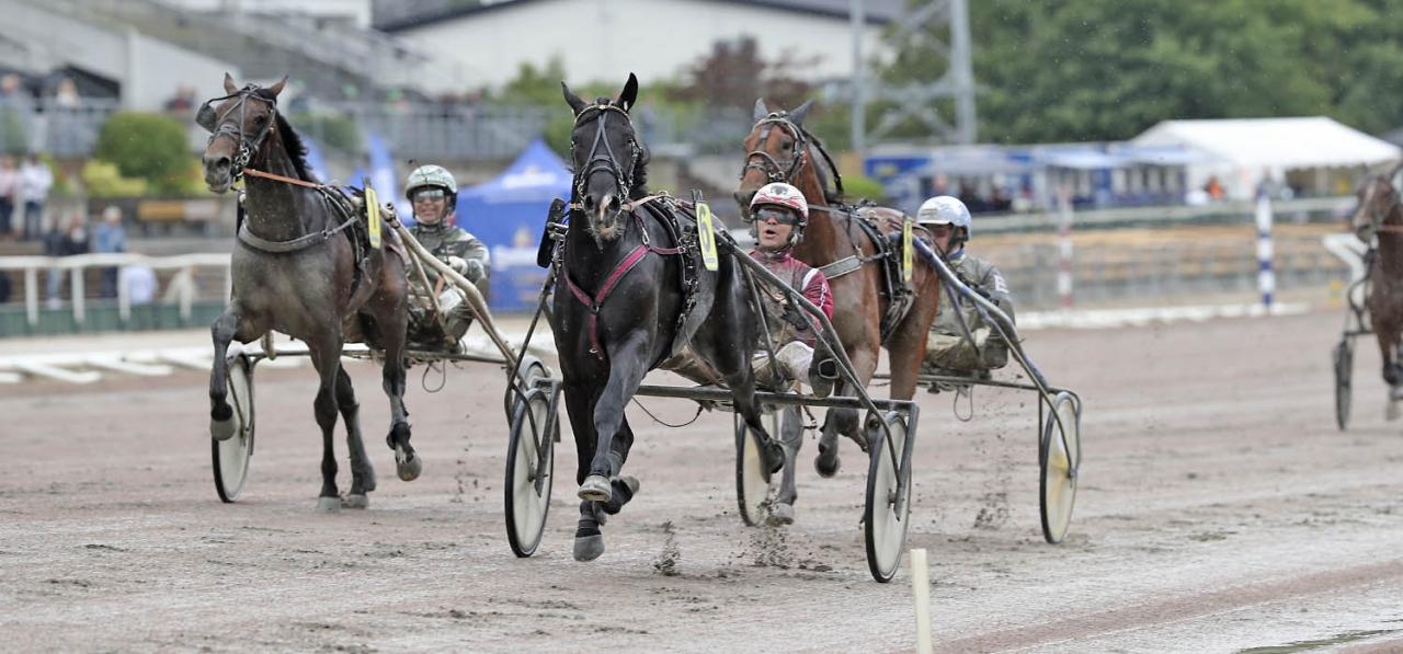 Smokin Joe är en av 26 som jagar finalplats i Svensk Uppfödningslöpning. Foto Mia Törnberg