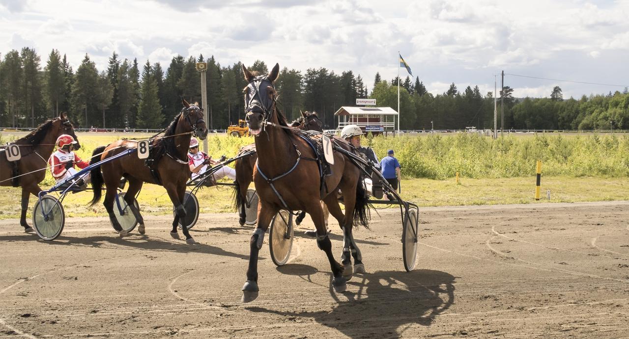 Foto Jeannie Karlsson/Sulkysport