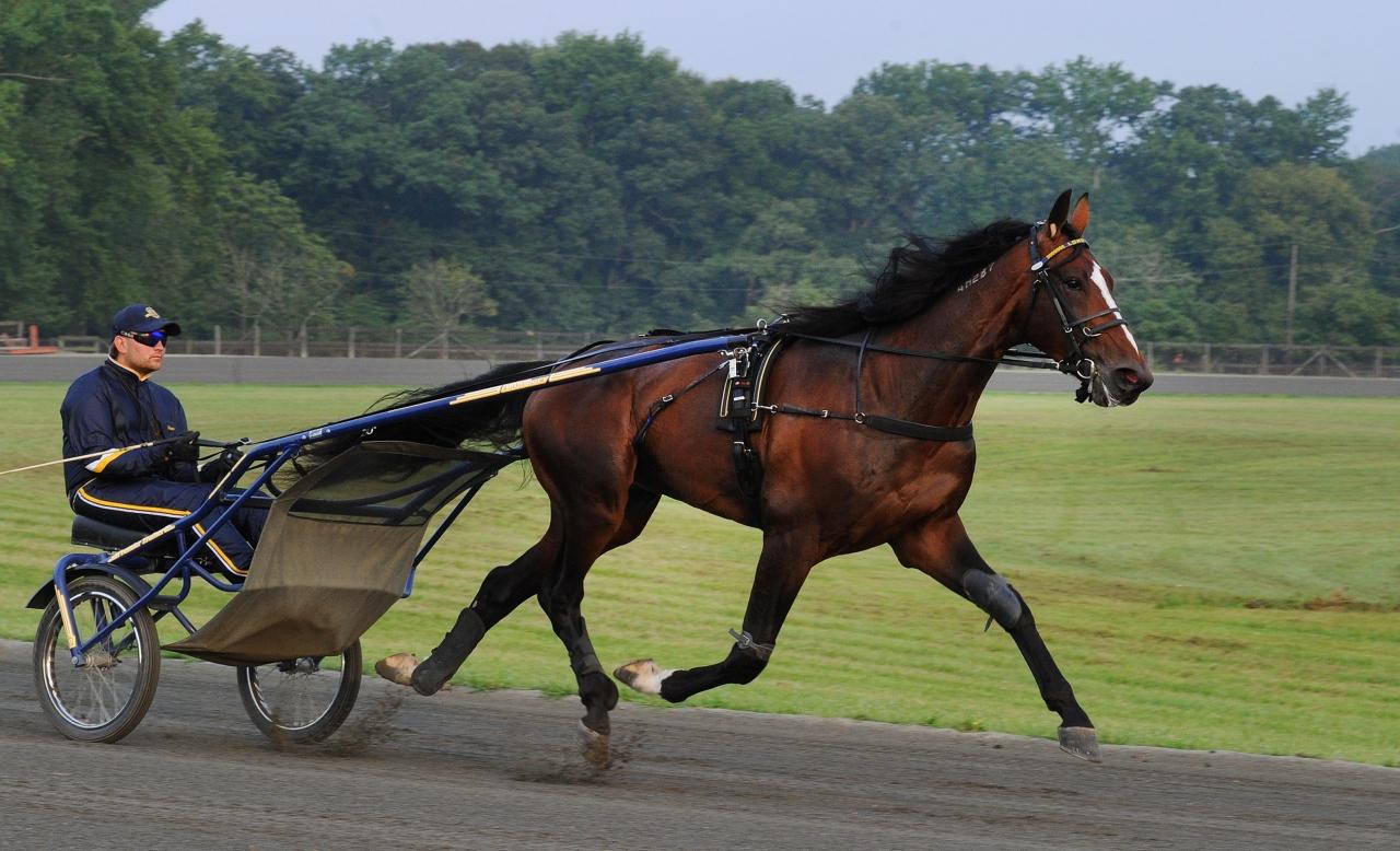 Long Tom i sista jobbet inför Hambletonian Stakes. Foto Adam Ström/stalltz.se
