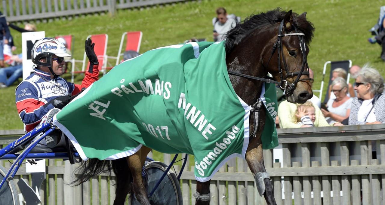 Nina Jonssons Myrs Hera är favorit i Kriteriestoet med 350.000 kronor till vinnaren. Foto Martin Langels/ALN