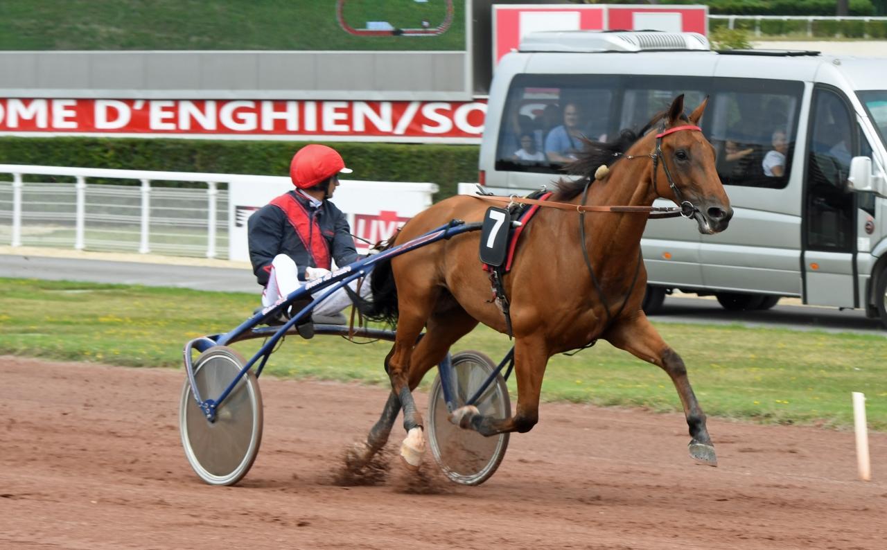 Aubrion du Gers ska starta i Grand Prix du Sud-Ouest. Foto: Gerard Forni