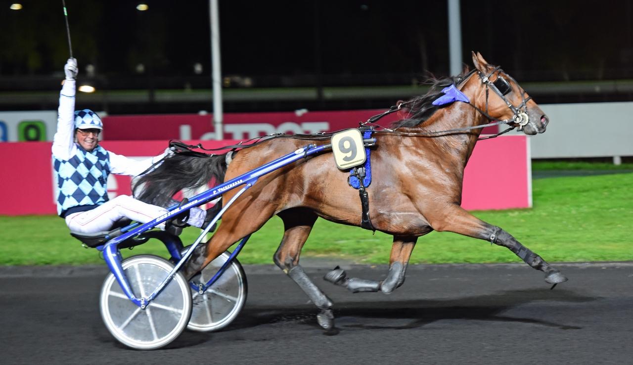 Drole de Jet är en av hästarna som flygs till Stockholm i helgen Foto: Gerard Forni