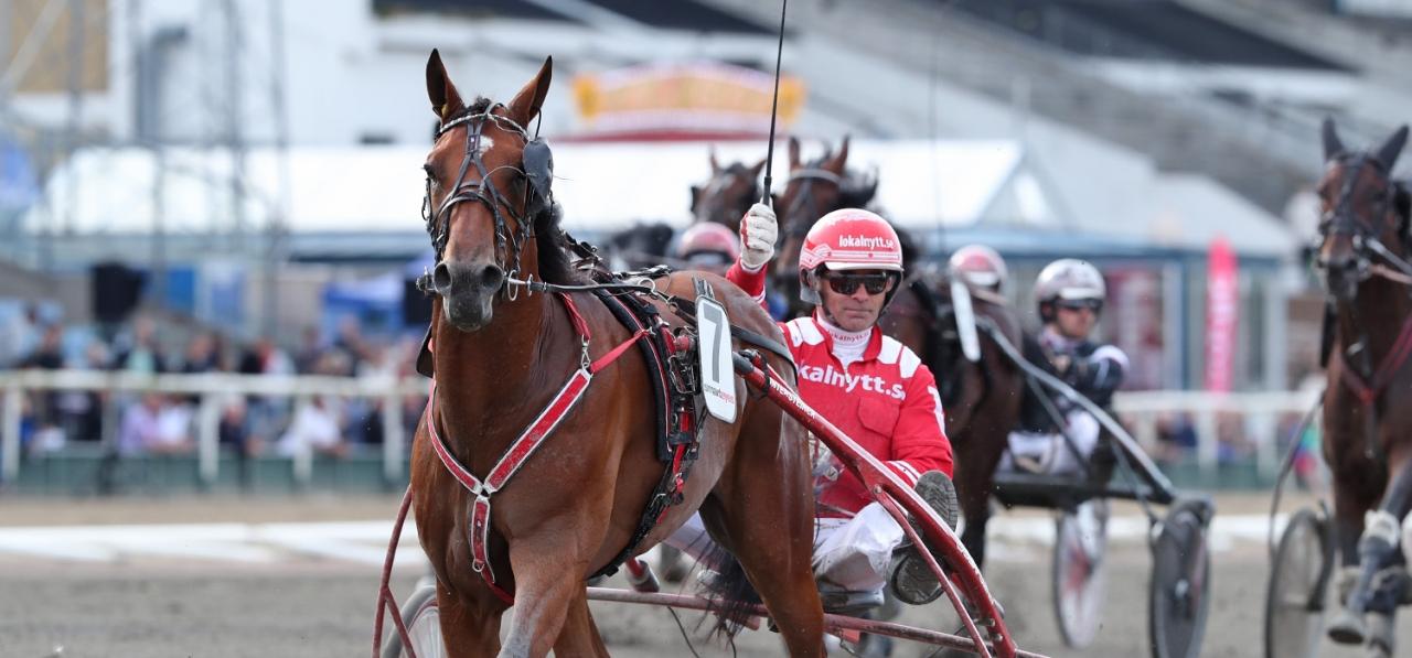 Peter Untersteiner, här bakom toppfemåringen Generaal Bianco, vann fyra lopp på Jägersro på tisdagen. Foto: Mia Törnberg/Sulkysport