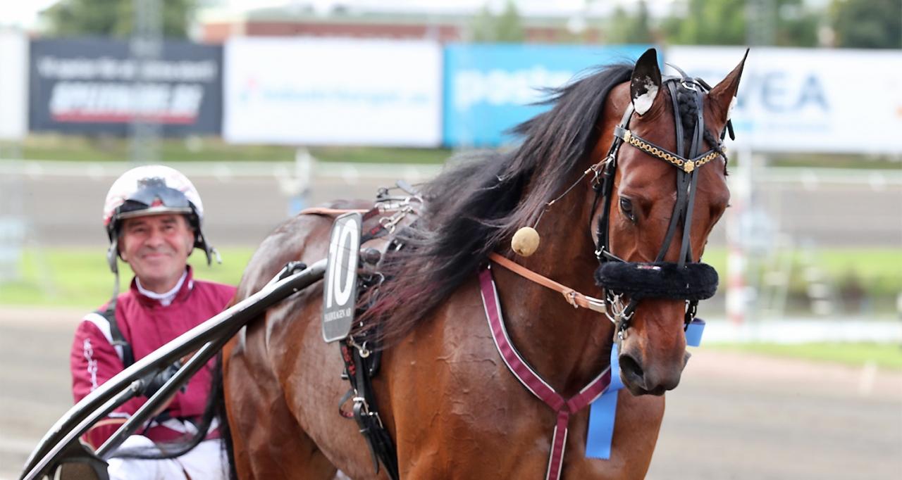 Marciano har lämnat Lutfi Kolgjinis stall i Vomb. Numera är han norrlänning! Foto: Mia Törnberg