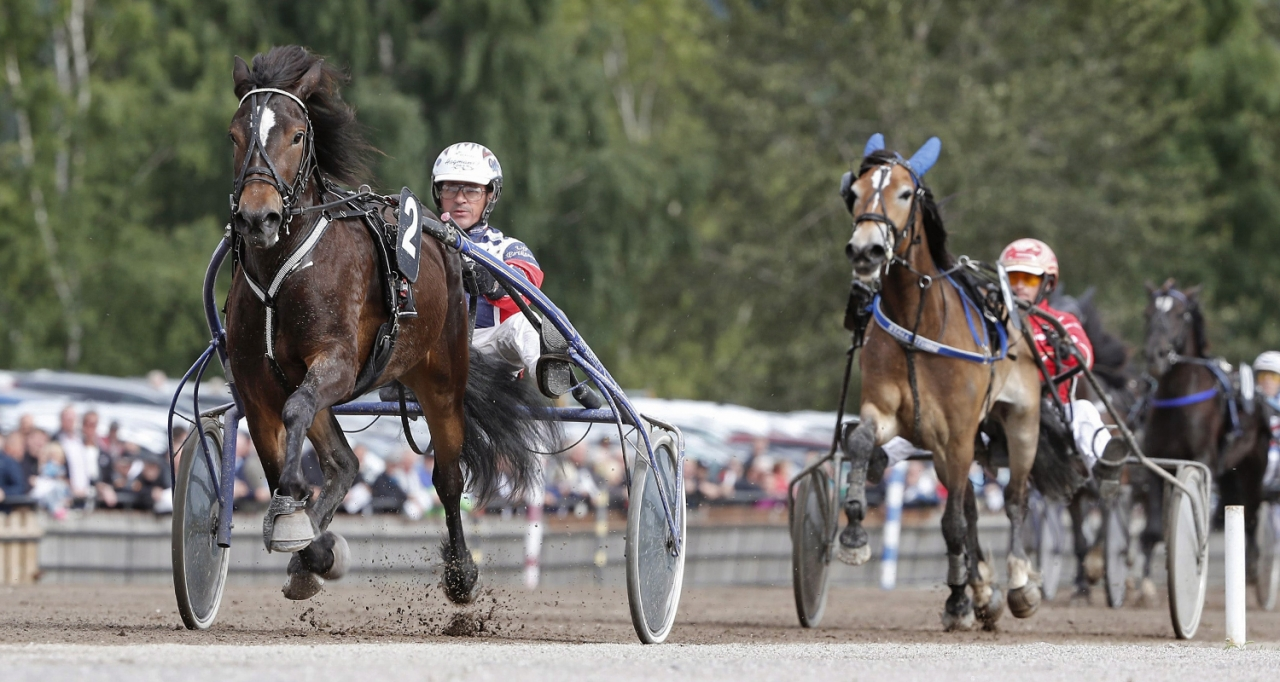Myrs Hera med Ulf Eriksson vid segern i Kriteriestoet 2017. Foto Micke Gustafsson/ALN