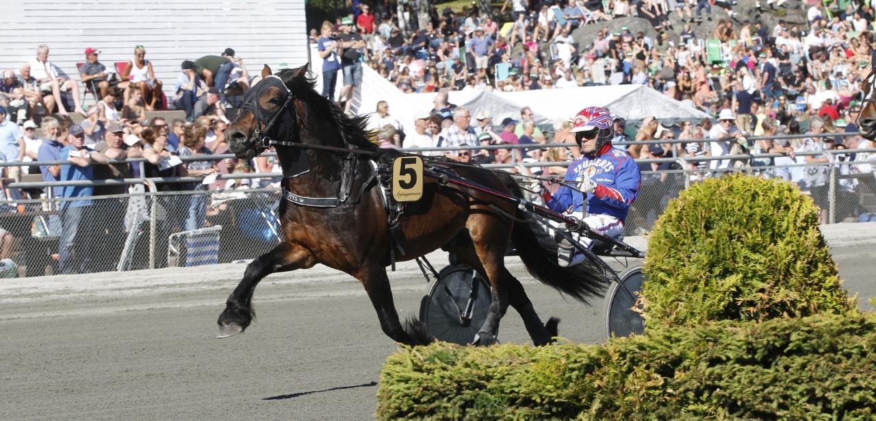Odin Eld är en av de sex hästar som ska avelsvärderas på Wången. Foto Lennart Kihlman/ALN