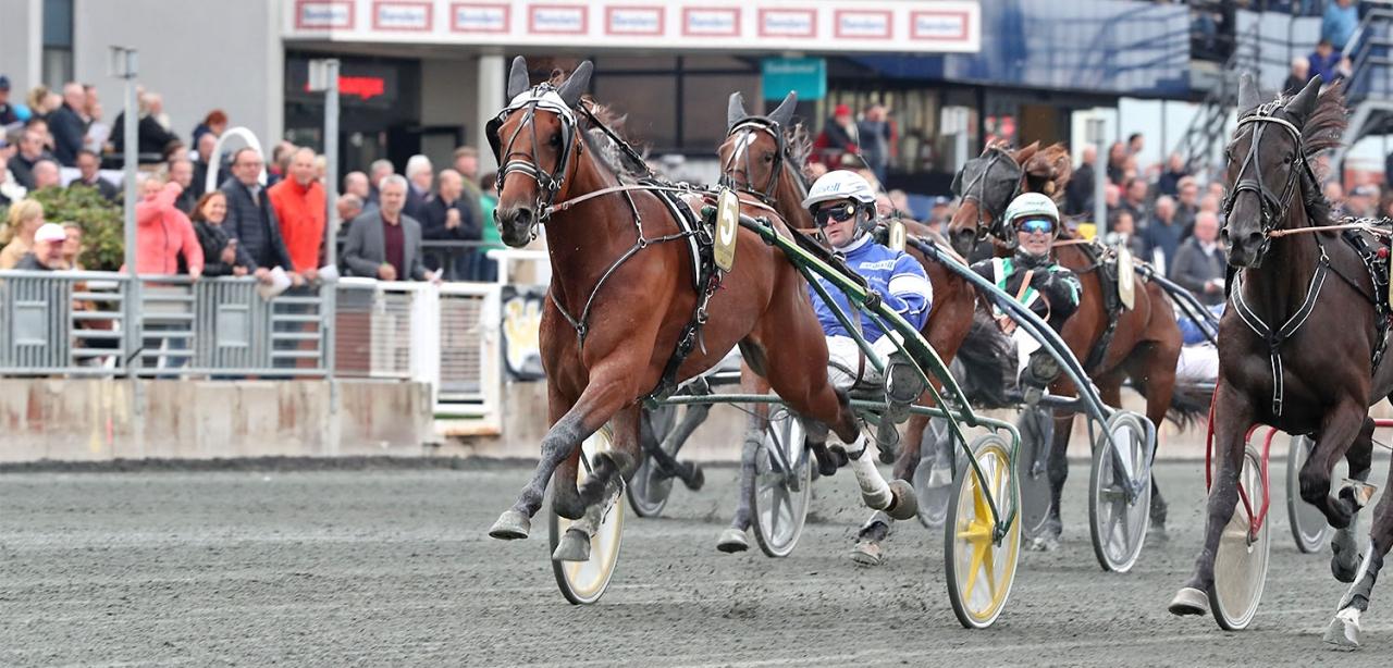 Oaksvinnaren Candy la Marc är en av alla topphästar som gästar Axevalla på tisdag. Foto MIA TÖRNBERG