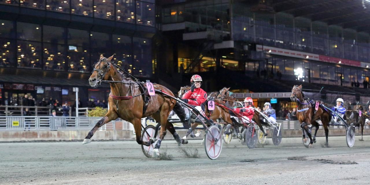 Derbyvinnaren Cyber Lane startar i Halmstad på måndag. Foto Mia Törnberg
