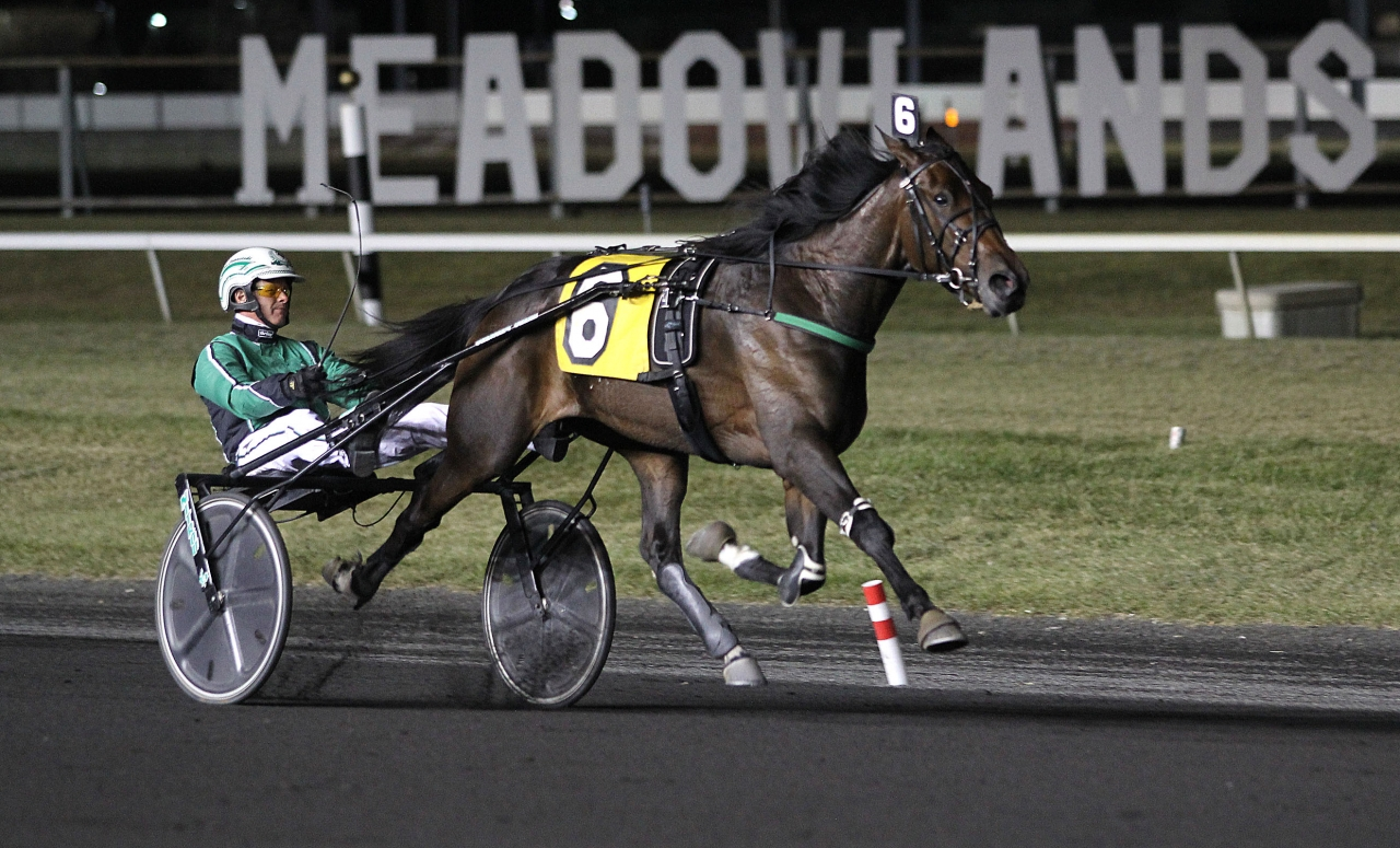Plunge Blue Chip och Åke Svanstedt startar i finalen i New York Sire Stakes på lördag. Foto: Lisa Photo