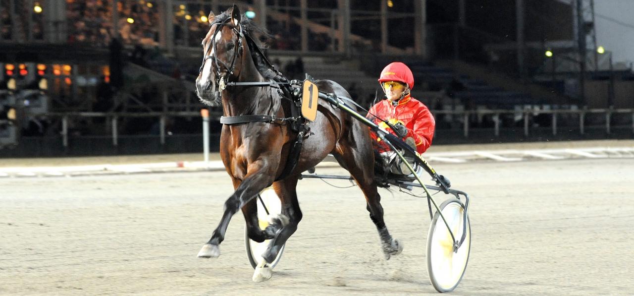 Disco Volante är en av sju hästar från Stefan Melanders stall i Solvallaseriens försök på onsdag. Foto Jörgen Tufvesson/ALN