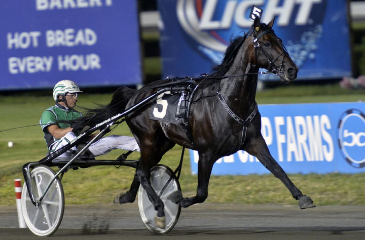 Världens snabbaste travhäst genom alla tider - Sebastian K. - har en startande avkomma i ASVT Trottex Auktionslopp. Foto Stefan Melander/stalltz.se