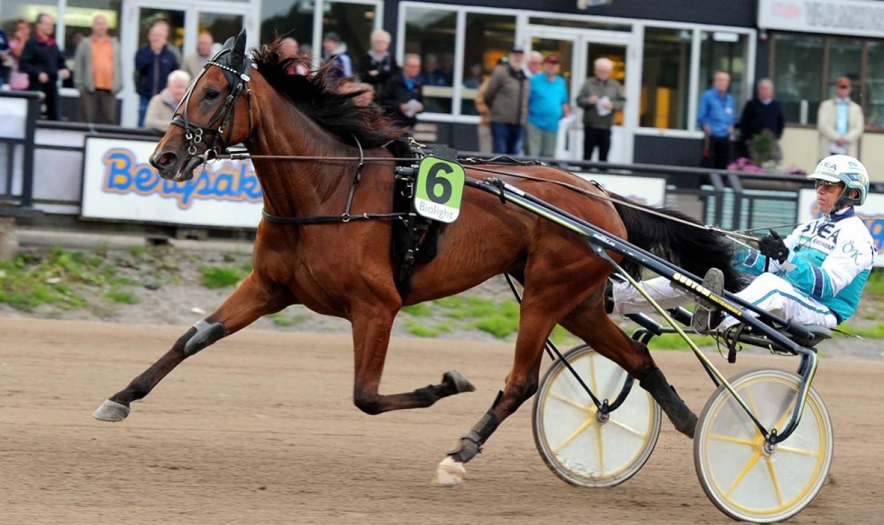 Undine ska fortsättningsvis tränas av Fredrik Linder på Romme. Foto: Stalltz.se