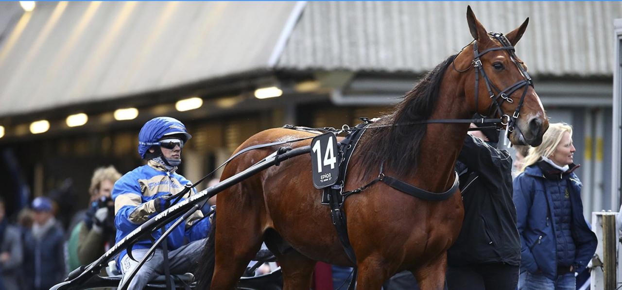 Twister Bi är osäkert startande i Prix d'Amérique. Här tillsammans med tilltänkte kusken Alexandre Abrivard. Foto Scoopdyga.