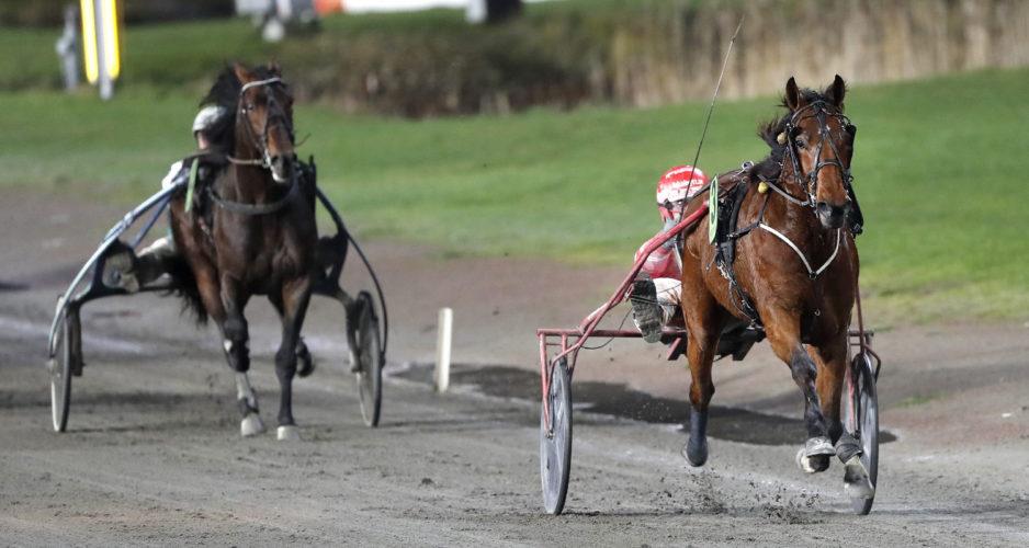 Sulkysport, Travsport, Trav, Häst, Demolition Man F. , Peter Untersteiner