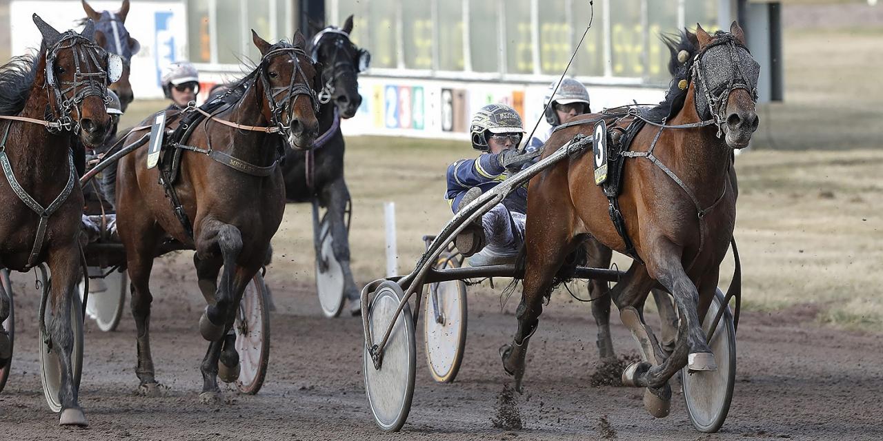 Joakim Grandlund vann V75-lopp med sin favorithäst Umberto för knappt ett år sedan. Foto: Micke Gustafsson/ALN