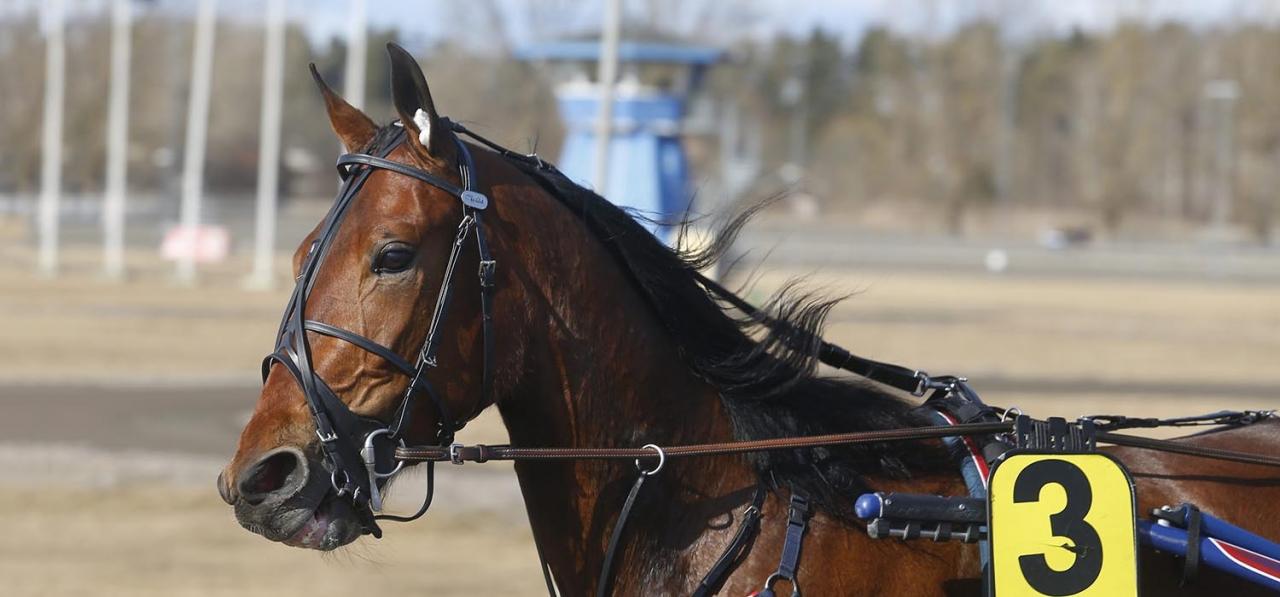 Reijo Liljendahl-tränade Exclamation Mark gör intressant comeback. Foto: Hanold/ALN
