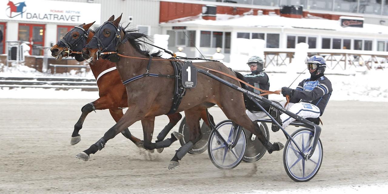 My Dream Art och Nicklas Westerholm har bra segerchans i ett stayerlopp. Foto Micke Gustafsson/ALN