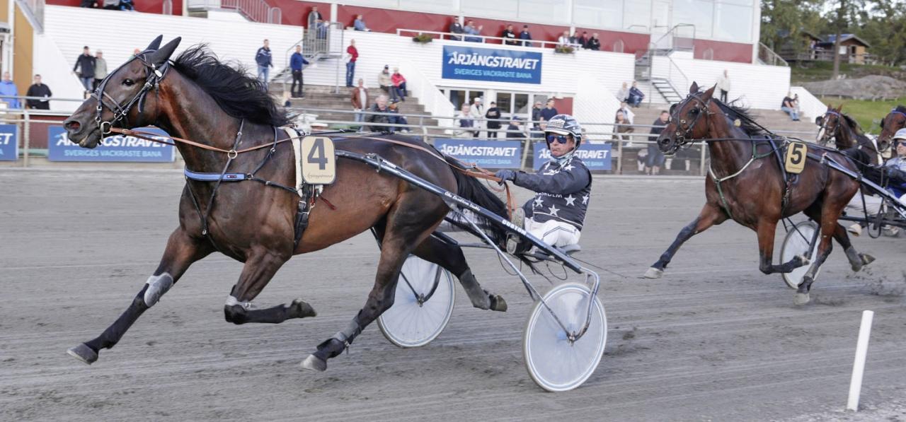 Porthos Race har spetschans och han trivs ypperligt i ledningen. Foto Lennart Kihlman/ALN