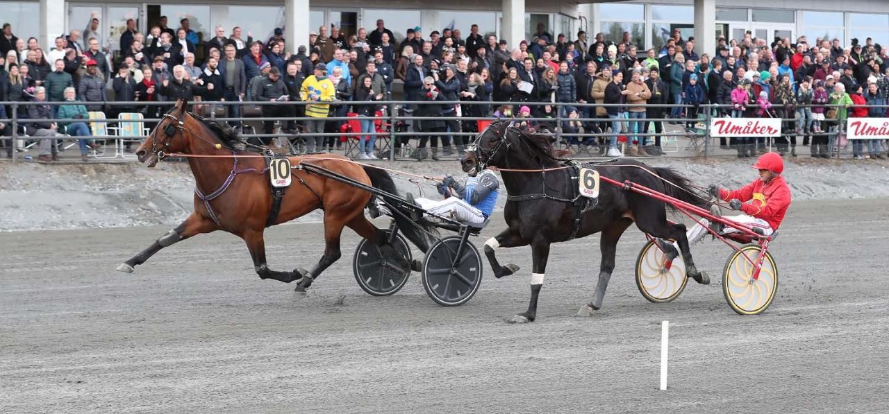 Beau Mec och Carl Johan Jepson vann Guldbjörken före Cruzado Dela Noche. På onsdag möts de igen. Foto Jeannie Karlsson/Sulkysport