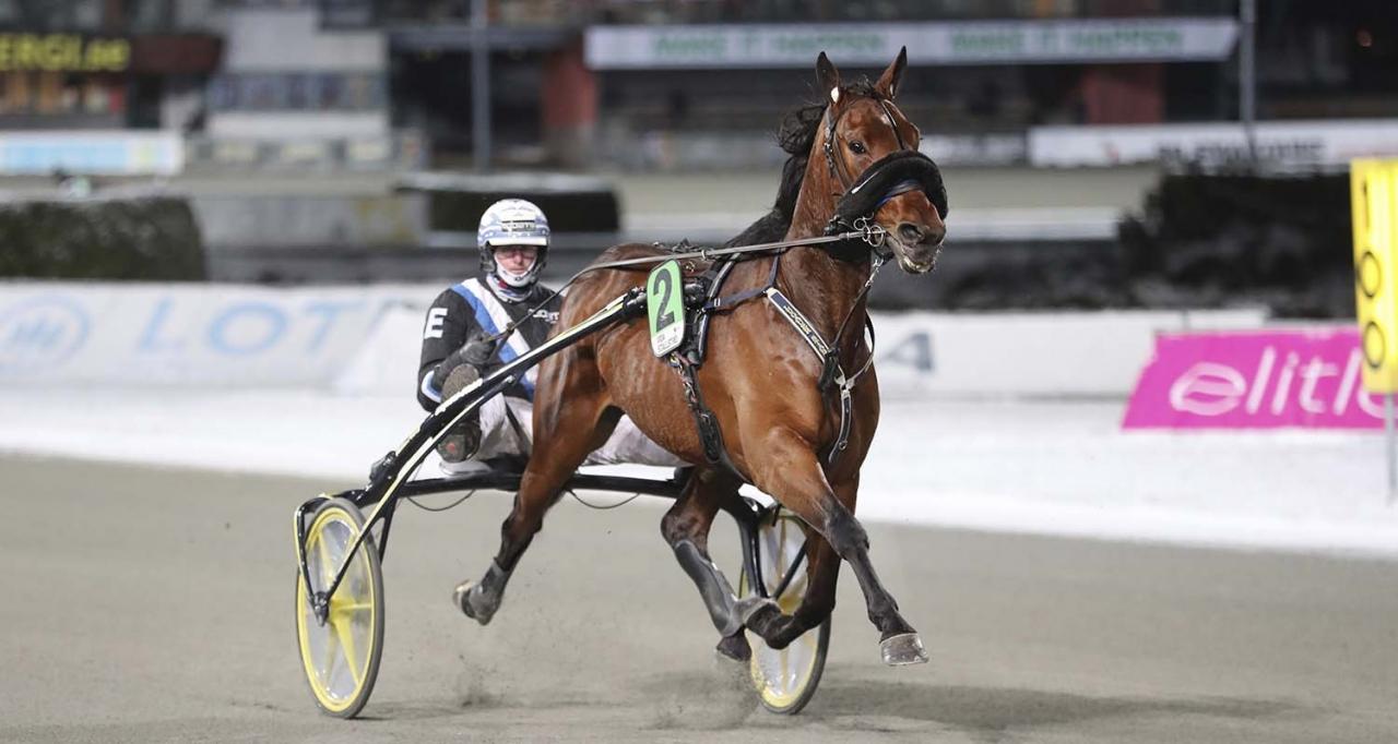 Harran Boko gör första starten sedan i slutet av januari. Foto Jeannie Karlsson/Sulkysport