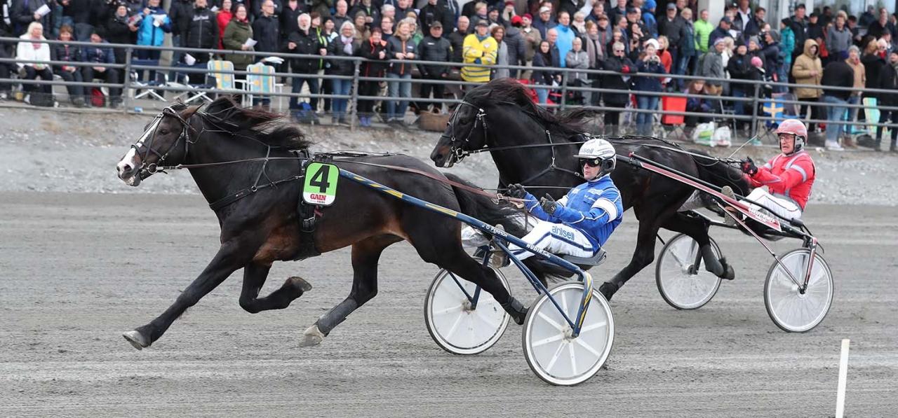 Lome Brage och Erik Adielsson vann Vårbjörken och Elitkampen i våras. Foto Jeannie Karlsson/Sulkysport