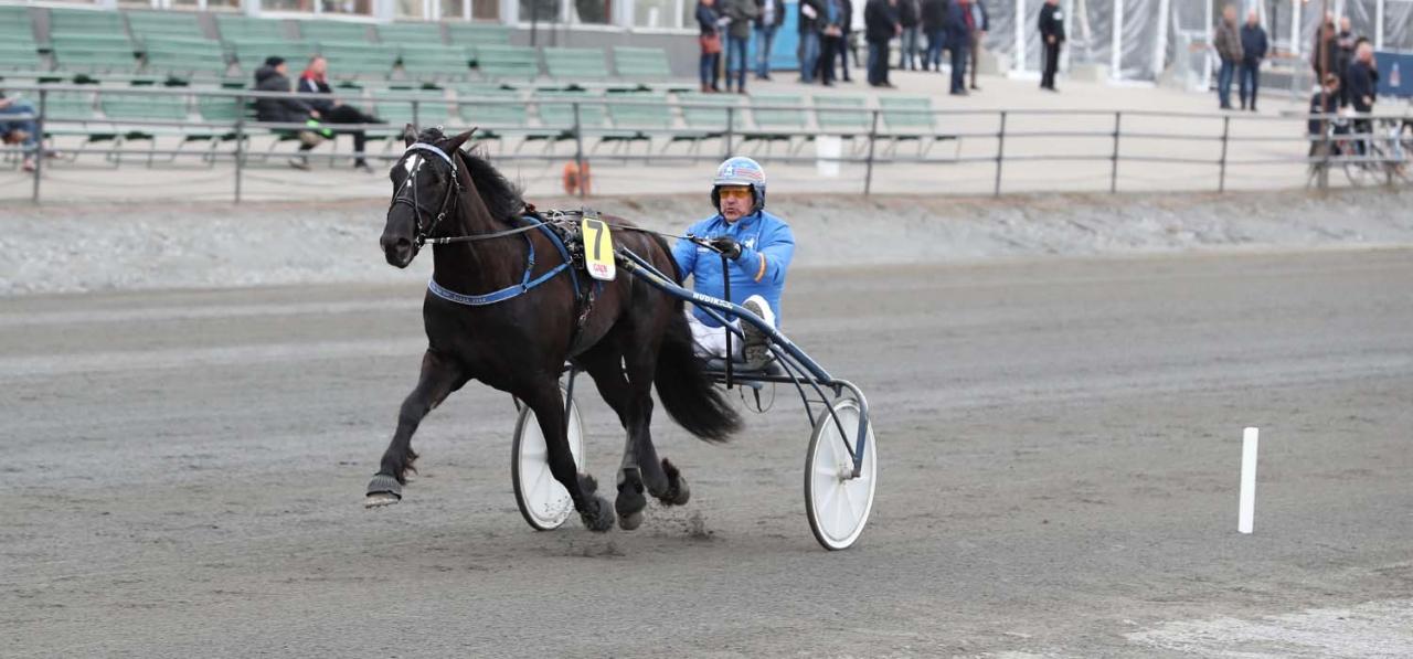 Månlykke A.M. tog åttonde segern i den nionde starten  i det första loppet på Umåker ikväll. Foto Jeannie Karlsson/Sulkysport