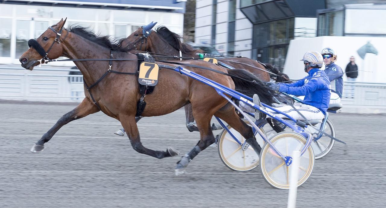 Well Done la Marc och Björn Goop. Ikväll körs stoet av Erik Adielsson. Foto Tommy Andersson/ALN