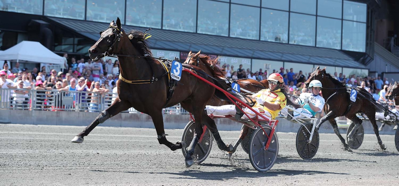 Arazi Boko vänder tillbaka till Italien efter femteplatsen i Årjängs Stora Sprinterlopp. Foto Jeannie Karlsson/Sulkysport