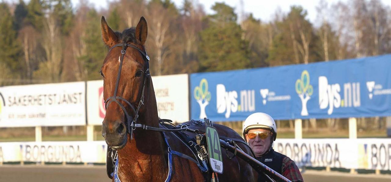 Bo E Nilsson och Bo C. är ett av hemmahoppen inom morgondagens V75-omgång i Örebro. Foto: Hanold/ALN