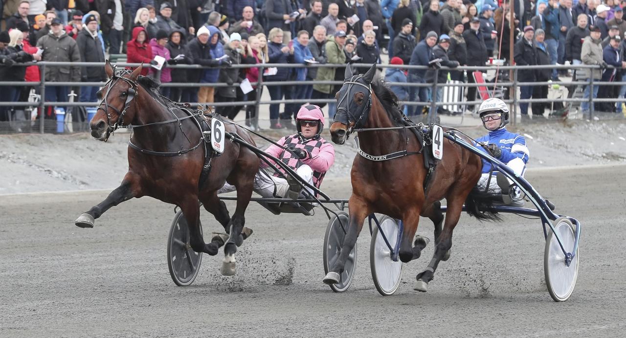 Muscle Hustle och Diamanten duellerade i inledningen av Berth Johansson Memorial i Umeå i slutet av april. På lördag möts de igen i femåringsloppet Lyon Grand Prix på Åby. Foto Jeannie Karlsson