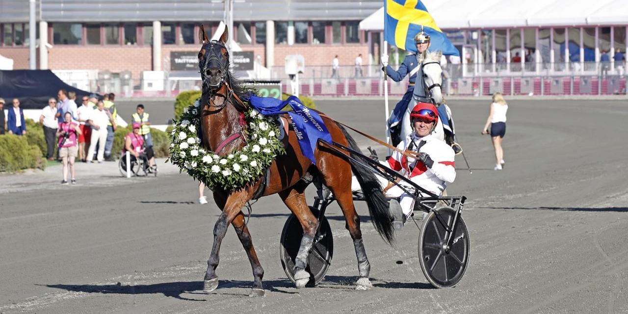 Platon Face med segerkrans efter segern i Harper Hanovers lopp. På lördag jagar han en direktplats till Åby Stora Pris. Foto Mia Törnberg