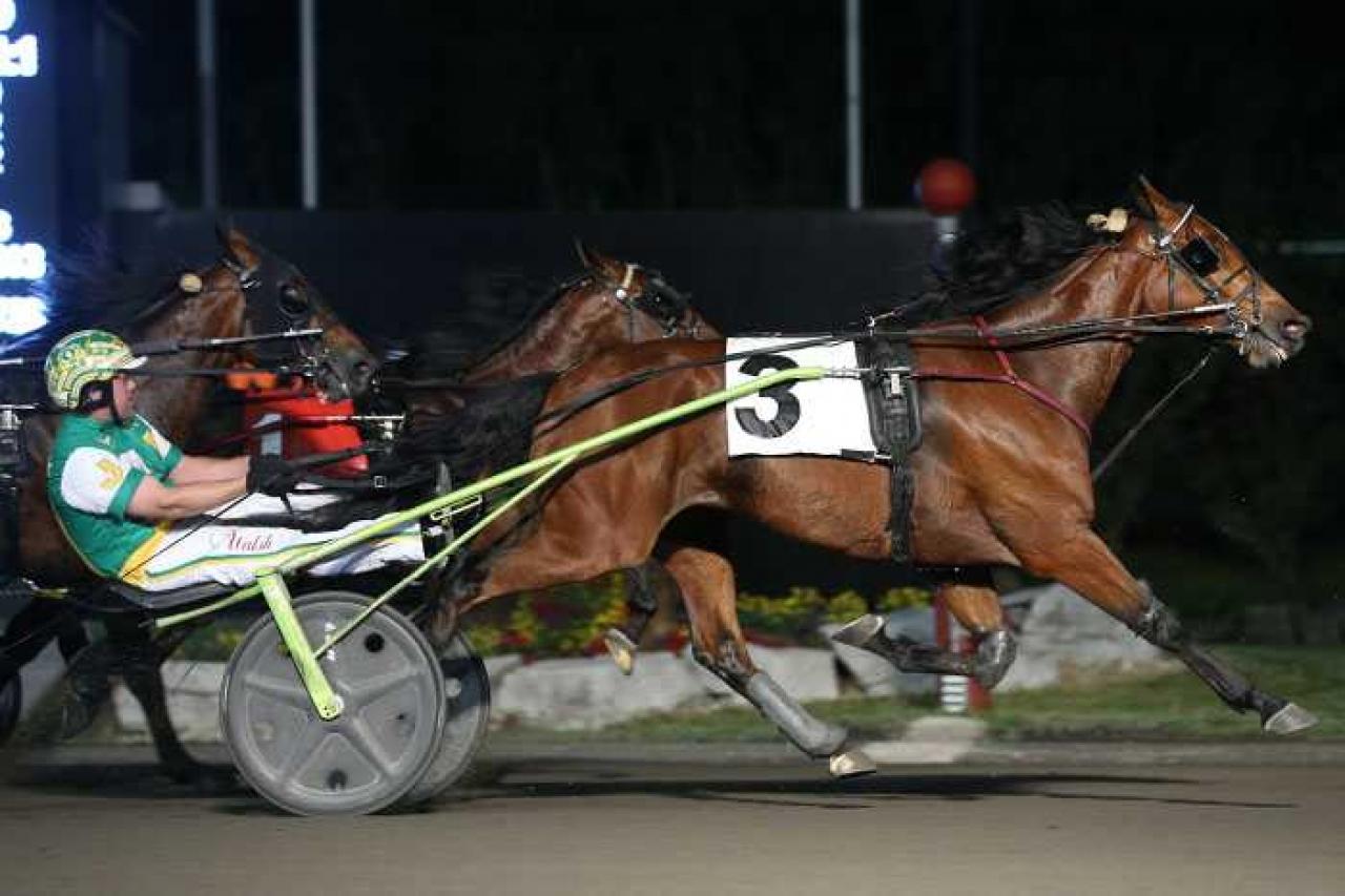 Will Take Charge är snabbast i Kanada i år och i natt travade han topptiden 1.09,3 för Jody Jamieson. Foto: New Image Media
