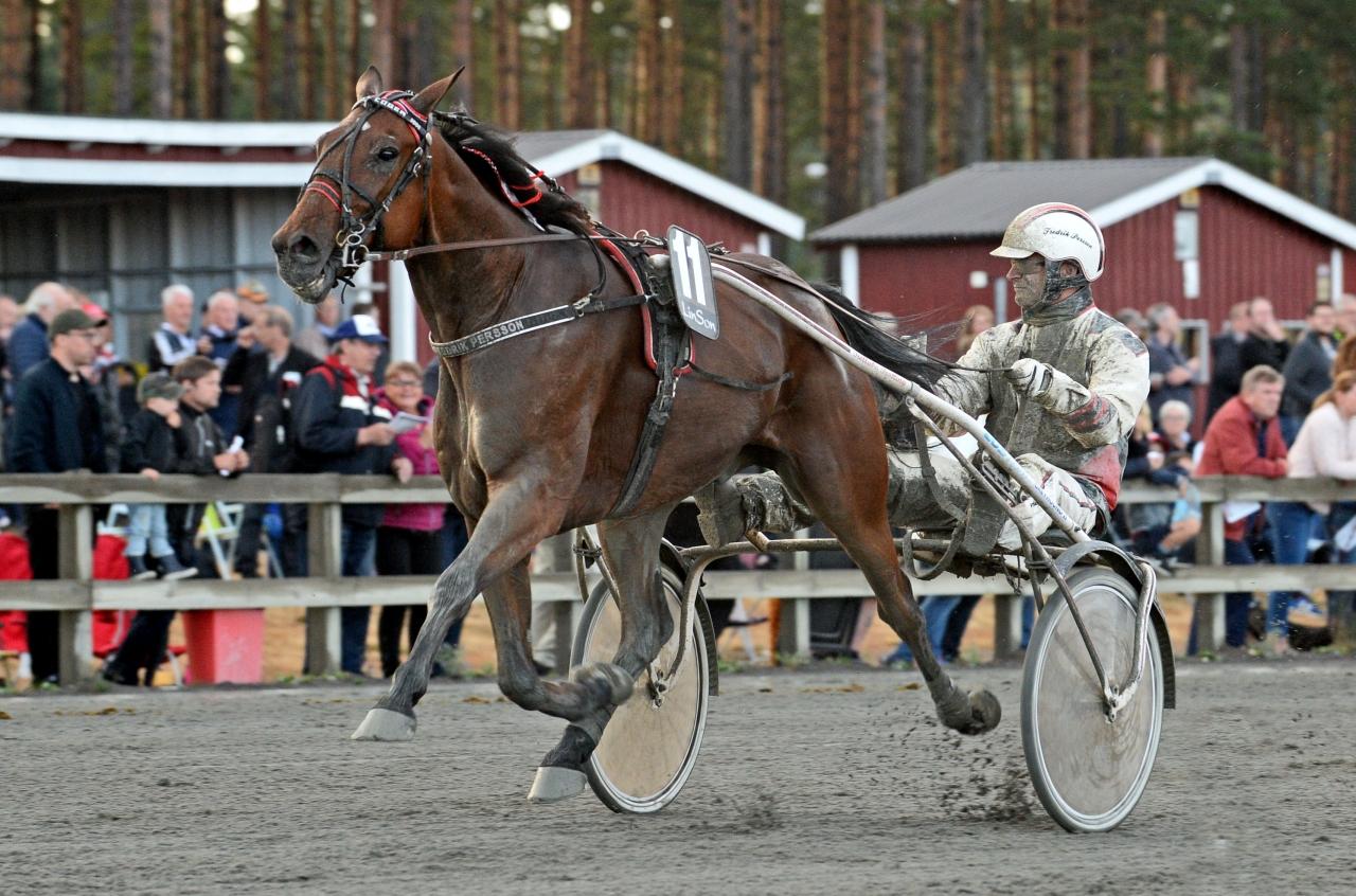 Fredrik Perssons Elliot Coger vann Smålandsstayern. Foto: MVA Foto