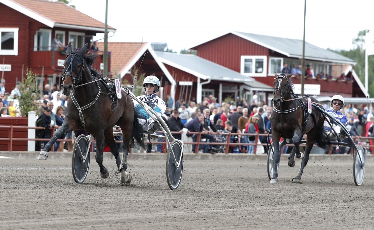 Perfect Spirit är obesegrad efter fyra starter på svensk mark. Nästa uppgift blir Sprintermästaren. Foto: Micke Gustafsson/ALN