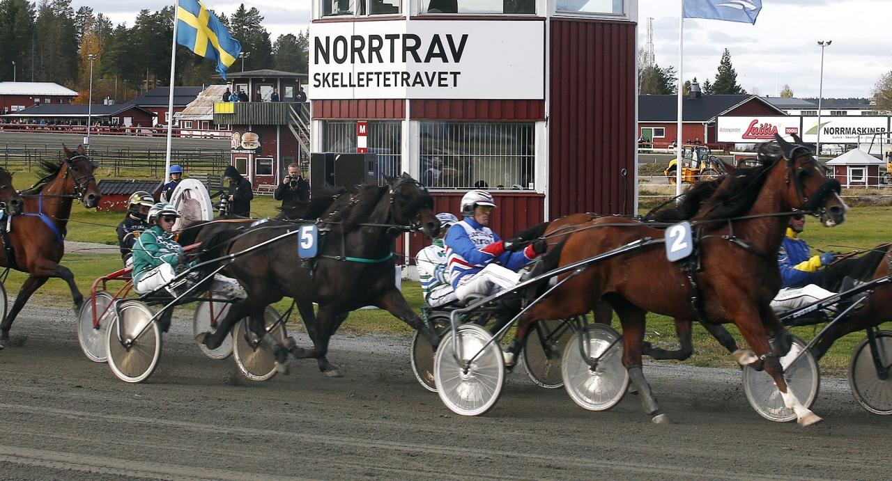 Skelleftetravet har sin största tävlingsdag för året under Midsommardagen. Foto Hanold/ALN