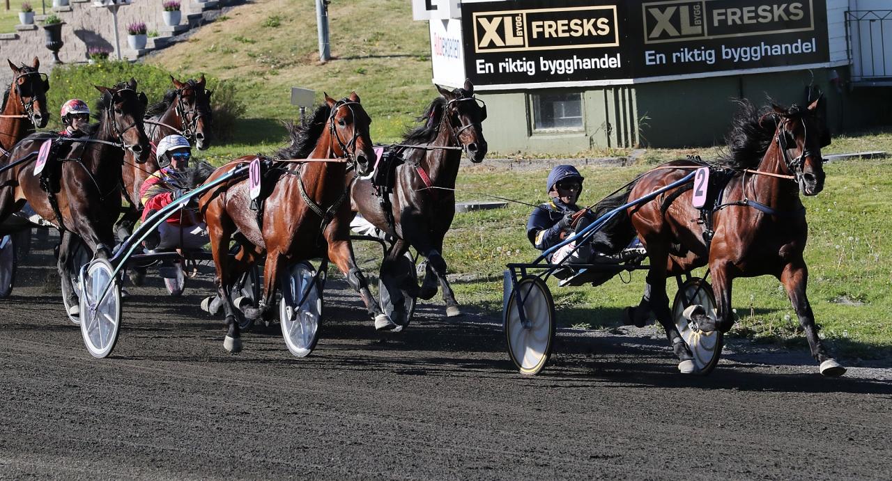 Volstead blev mosad av Readly Express i Jämtlands Stora Pris. På söndag tar han nya tag i Kalmarsundspokalen. Foto Mathias Hedlund