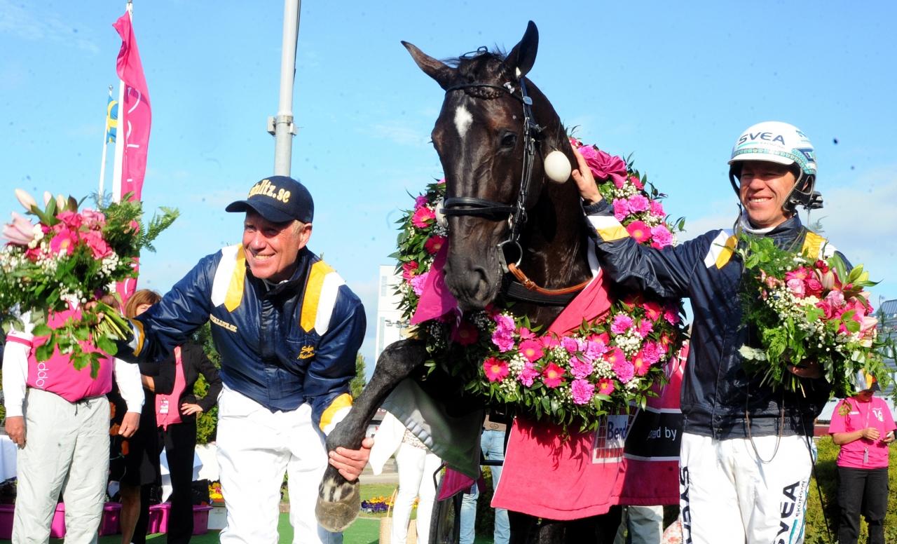 Nuncio – en av de hästar som närmast ratats på auktion för att sedan bli en stjärna. Foto: stalltz.se