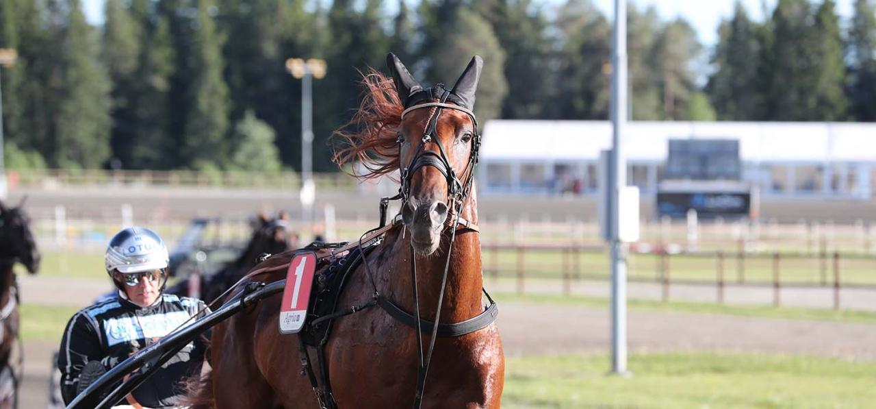En häst skall bara kunna ha ett hemland enligt krönikören. Frenchnorwegian ID, räknas som fransk häst men även norsk. Foto Mathias Hedlund.