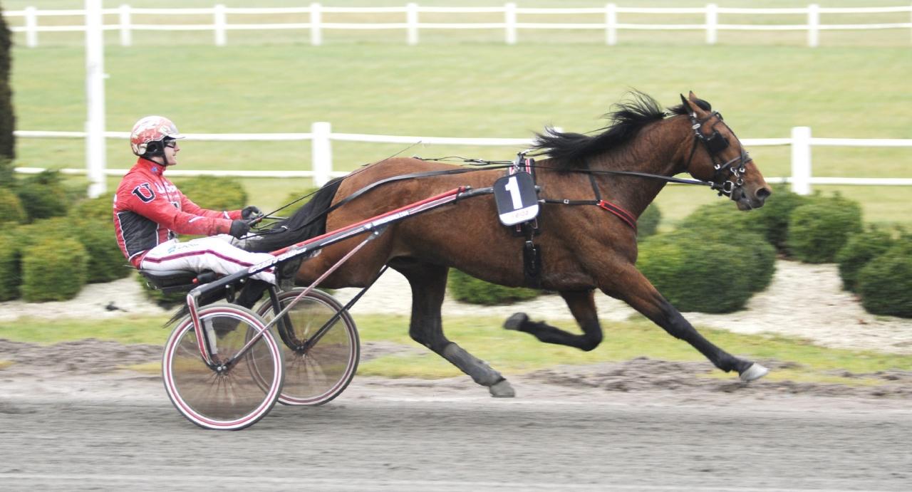 Johan Untersteiner skickar en häst till Bollnäs tävlingar och Harvey har fin chans i klass II-försöket. Foto Jörgen Tufvesson/ALN