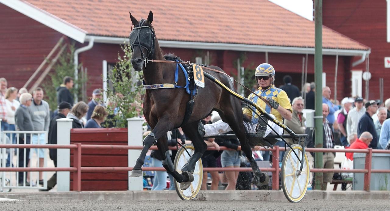 On Track Piraten och Hans R Strömberg visar åter upp sig för hemmapubliken på Siljanstravet i Rättvik i Sommartravets final på lördag, där mångmiljonären startar från 40 meters tillägg. Foto Jeannie Karlsson/Sulkysport