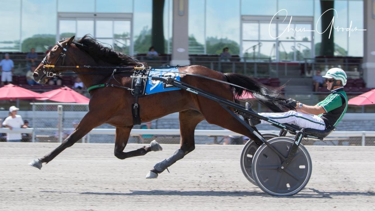 Åke Svanstedt var ordentligt i farten på Meadows igår och vann bland annat med Mellby Gårds Personal Paradise. Foto: Chris Gooden