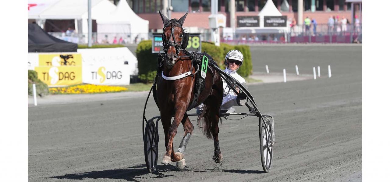 Rose Mary missar Stochampionatet. Foto Jeannie Karlsson/Sulkysport