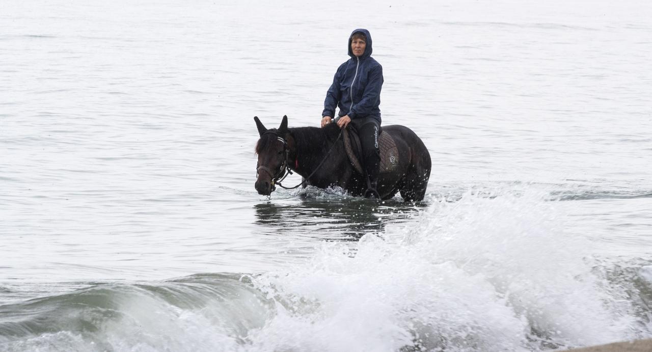 Urlo dei Venti rids flera gånger i veckan i Medelhavet med sin skötare Nina Pursiainen på ryggen. Nyligen blev dock hästen svullen i ett ben efter ett möte med en brännmanet. Foto Jeannie Karlsson/Sulkysport