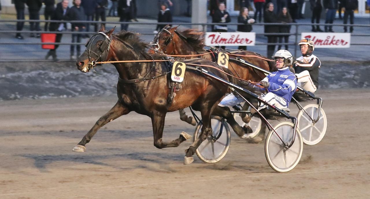 Svante Båth-tränade Attraversiamo tillhör en av förhandsfavoriterna till Kriteriet. Foto Jeannie Karlsson